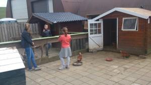 kinderboerderij op terras